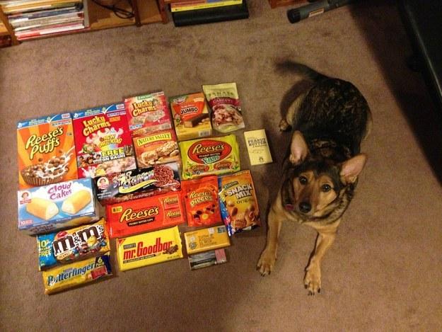 21個你家狗狗每天都會給你的禮物,看完我眼眶已經紅了。