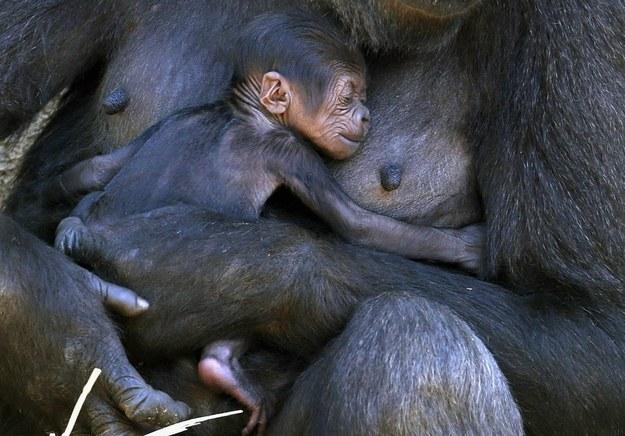 22個最感動的證據,會讓你不得不相信動物絕對是有靈性跟靈魂的!