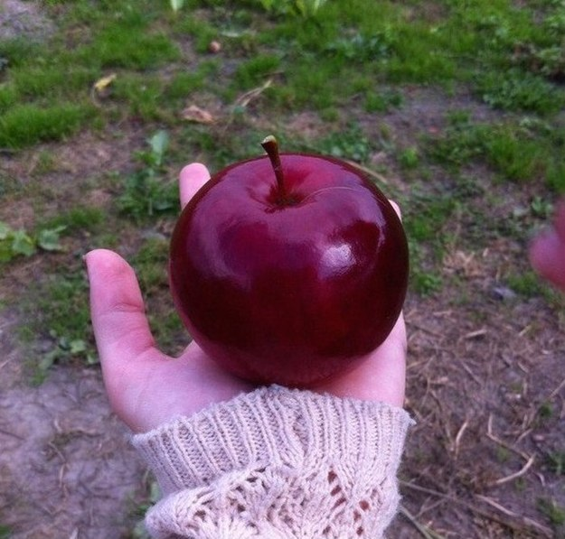 When this apple looked more like an apple than any apple has ever looked. 🍎