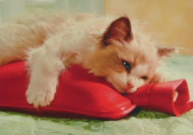 也有簡單的方法,睡覺時帶上熱水袋。