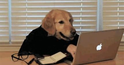 16隻打破智商極限的天才狗狗,看到時不要噴飯喔!