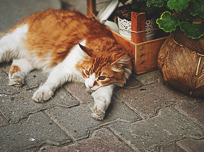 18.他們隨處可見,各個區域的居民也都會照顧自己區域的貓咪: