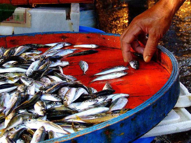 28. 魚市: