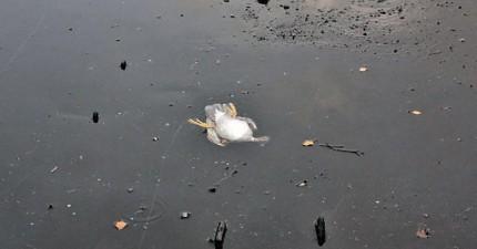 這名男子為了一隻困在冰裡的鴨子做的事情,讓他一夜爆紅。