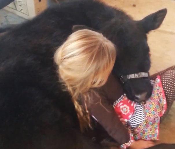 Izzy自出生起,一直都是Breanna的寵物小牛。
