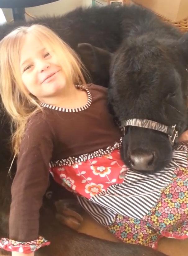 little-girl-pet-calf-cow-nap-breanna-izzy-9
