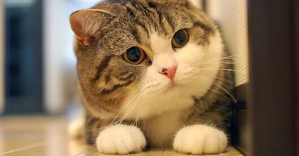 當你還在抱怨賺得不夠多,這5隻貓咪賺的錢都可以買幾棟房子了!