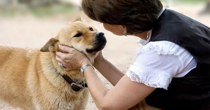 當你生氣罵狗狗的時候,他們真的都聽的懂嗎?用科學研究證明給你看!