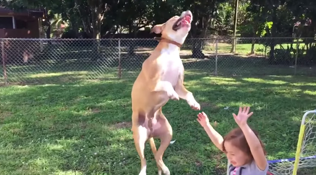 狗狗在半空中才發現自己闖禍要撞上小女孩的「經典表情」,你一定也有過...