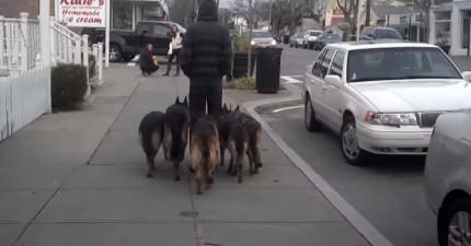 怎麼可能乖成這樣?!這5隻德國狼犬跟主人在路上做的事情讓所有路人看得目不轉睛!