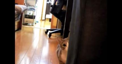這個人只是在拍攝家裡的貓咪,沒想到一轉眼就變成了貓咪的獵物。