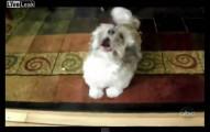 當這隻狗狗張開嘴巴的時候,就是我得到心臟病的時候。