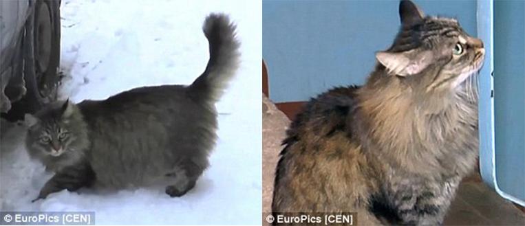有人把這個嬰兒丟棄在零度的冰天雪地中。沒想到最後是一隻貓咪的急智救了小嬰兒的命。