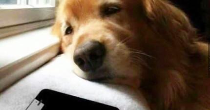 14段狗狗跟主人的爆笑簡訊對話。