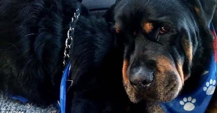 一輩子的好兄弟過世後,這隻狗流淚死守遺體的神情讓我心碎了。