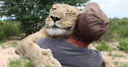 她是全世界上最不像獅子的獅子,無害到需要人類來教她如何打獵!