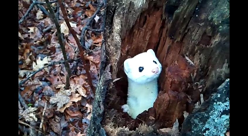他在森林裡打獵時巧遇「超稀有動物」 輕鬆打破拍過的「最可愛動物記錄」♥