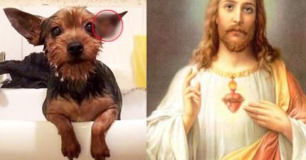 當她在幫狗狗洗澡的時候,意外發現耶穌竟然在狗狗耳朵中顯靈!