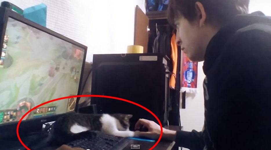 家裡有養貓的人在家做事情應該都不怎麼有效率。這就是為什麼。