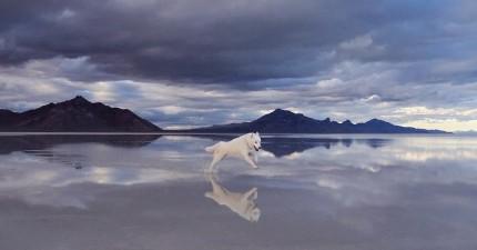 這些看似平凡的藝術家和他領養的狗狗的照片,會激起你內心生命的悸動。