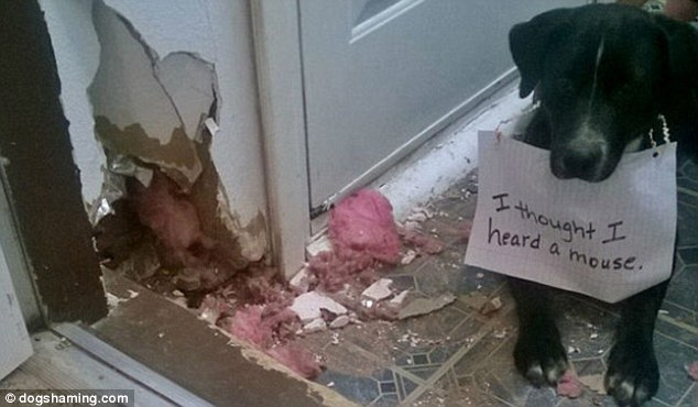 A for effort: This dog was relentless trying to protect his owner's home from invaders - but this door frame may not have been the best target