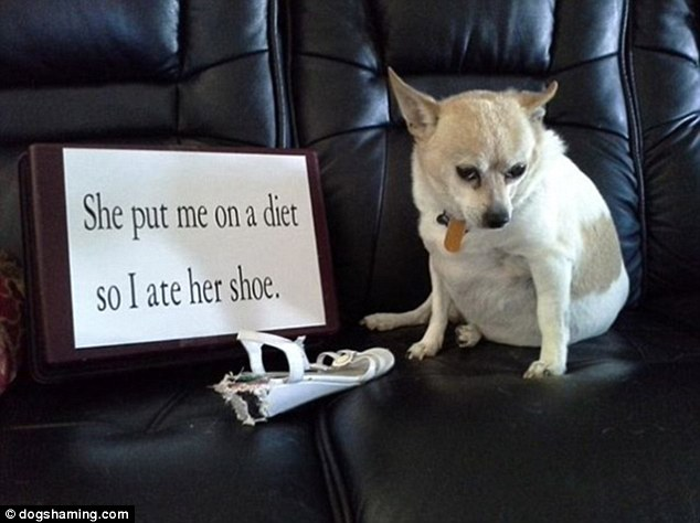 Shoe is on the other foot: This resourceful dog wouldn't be cowed into calorie-counting