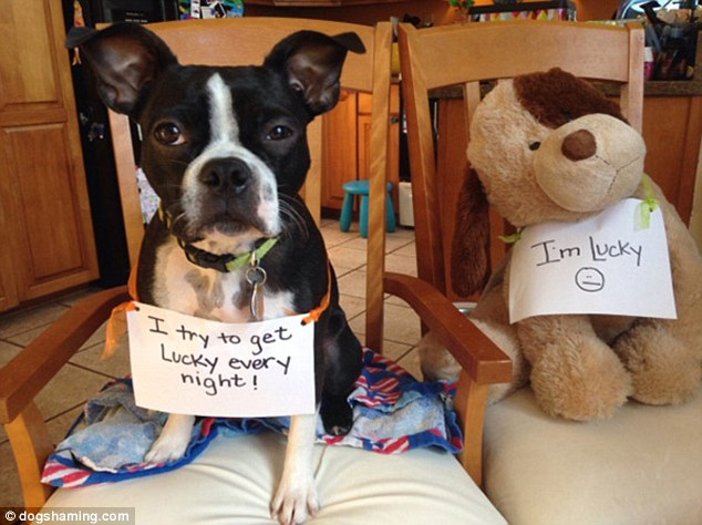 Unlucky: This pooch was caught trying to spread his affections a little too widely