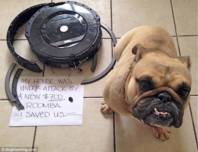Heroic: This doggy misdemeanor is among the most expensive documented by the Dog Shaming website