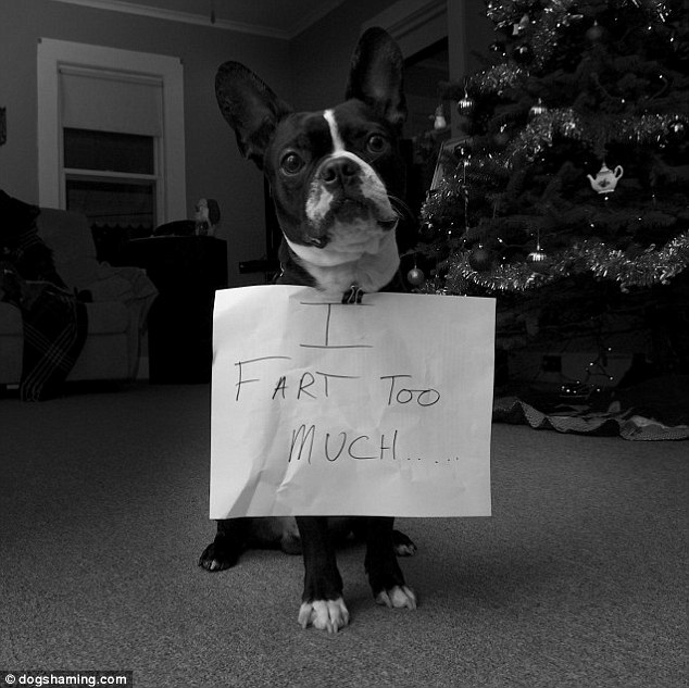Frank: This pooch's problem is a difficult one to get round