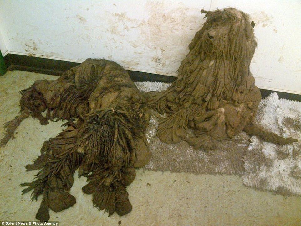 路人走過時完全沒看出角落的一團髒布是什麼,直到護理人員剃掉12公斤的髒毛...