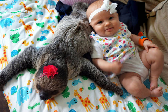 """48.) This sloth who became <a href=""""http://anims.viralnova.com/baby-sloth-best-friends/"""" target=""""_blank"""">instant besties with her family's new baby</a>."""