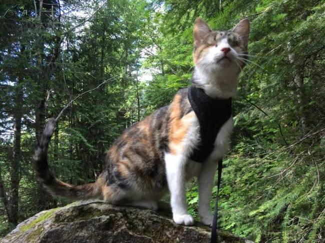 """34.) Honey Bee, the blind cat who doesn't let her lack of sight get in the way of her <a href=""""http://www.viralnova.com/blind-cat-hike/"""" target=""""_blank"""">sense of adventure</a>."""