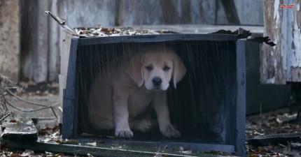 這隻可憐的狗寶寶走丟了被可怕的大野狼盯上,接著後面出現一陣馬蹄聲...!