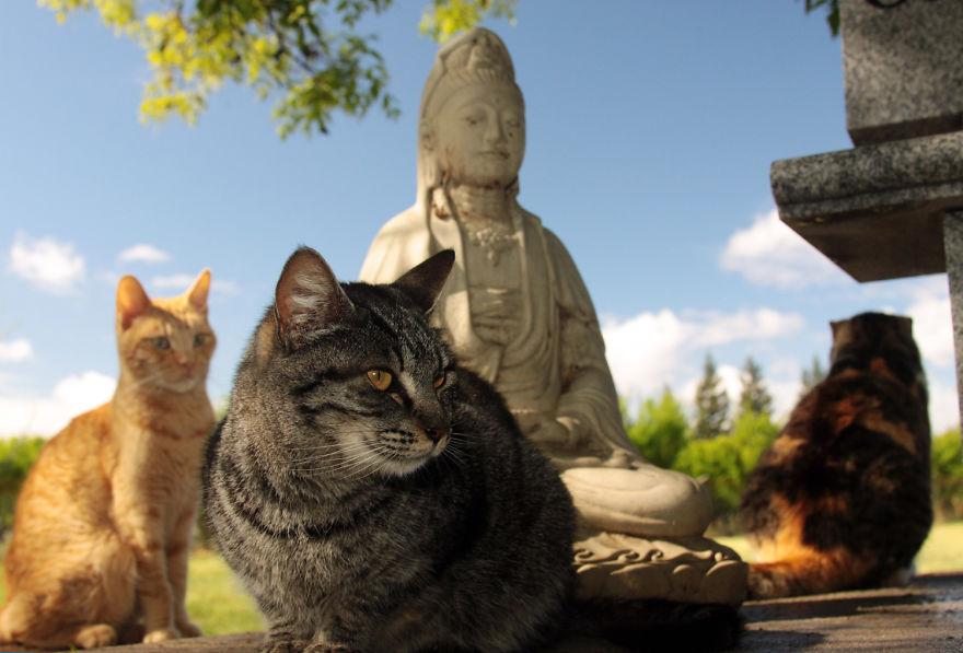 收容所不一定要很悲哀!你一定要看看這由700隻貓咪統治的天堂般的收容所。