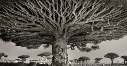 她花了14年拍攝世界各地最古老的巨樹。這些是大自然留給我們最珍貴的禮物!