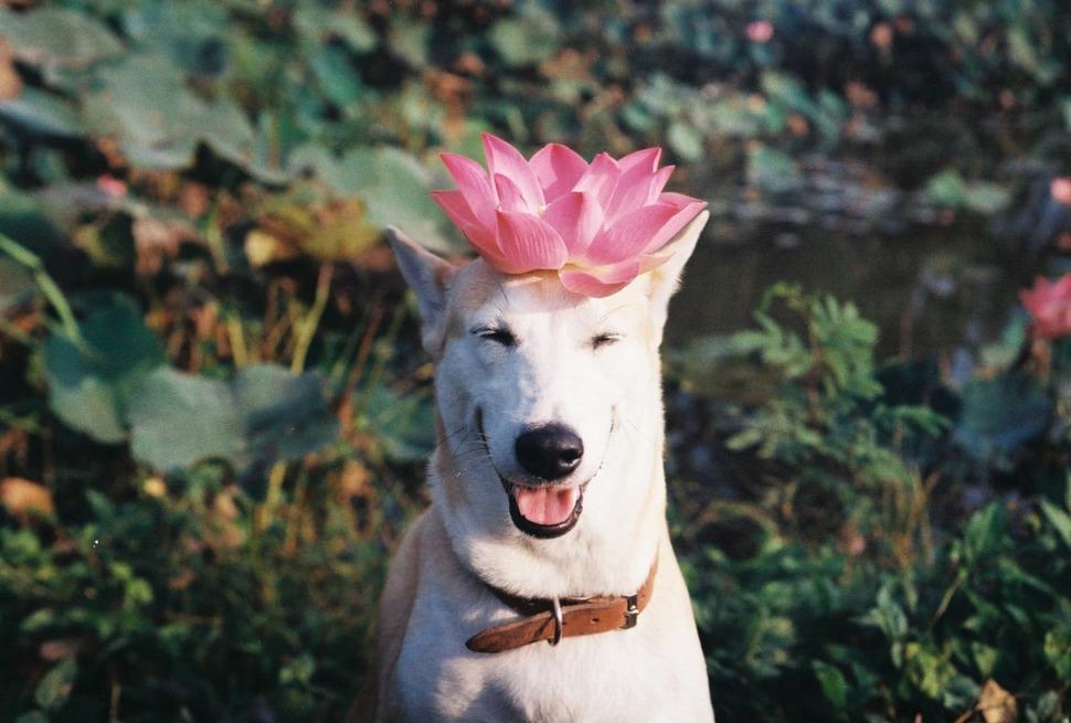 在這隻全世界最愛笑的狗狗笑容背後,有一個會讓你充滿希望的辛酸生命故事。