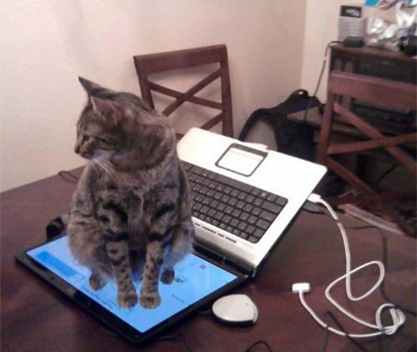 """""""好的,我以後會聽話不坐在鍵盤上了。"""""""