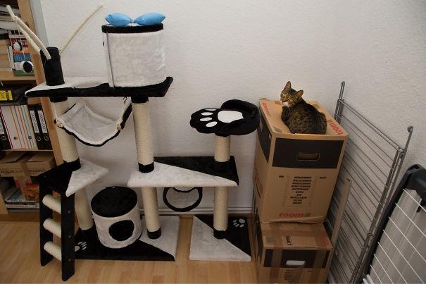1. 貓咪會窩在一個他覺得最爽的地方。