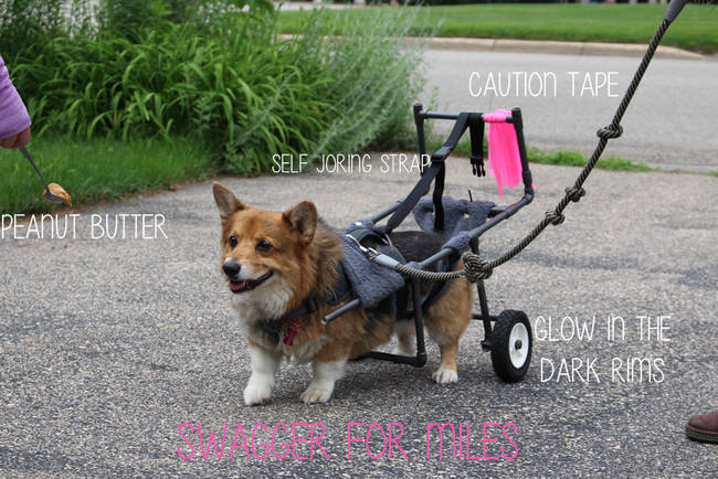 """22.) Bentley, the corgi cutie whose owners <a href=""""http://www.viralnova.com/bentley-on-wheels/"""" target=""""_blank"""">created this customized set of wheels</a>."""