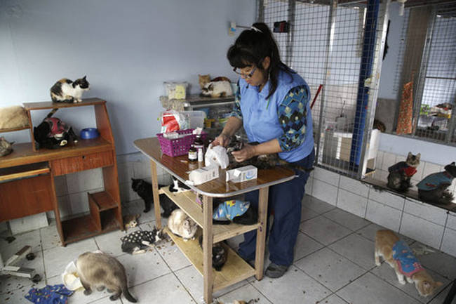 """26.) This nurse in Peru who lives with and cares for <a href=""""http://www.viralnova.com/cat-nurse/"""" target=""""_blank"""">175 cats who all suffer from feline leukemia</a>."""