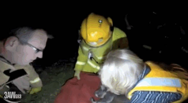 """29.) This group of Australian firefighters who <a href=""""http://www.viralnova.com/firefighters-save-koala/"""" target=""""_blank"""">saved an injured koala's life with CPR and mouth-to-mouth resuscitation</a>."""