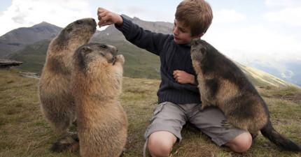 54個最感人的動物故事,看完後會讓你再次對世界充滿希望。