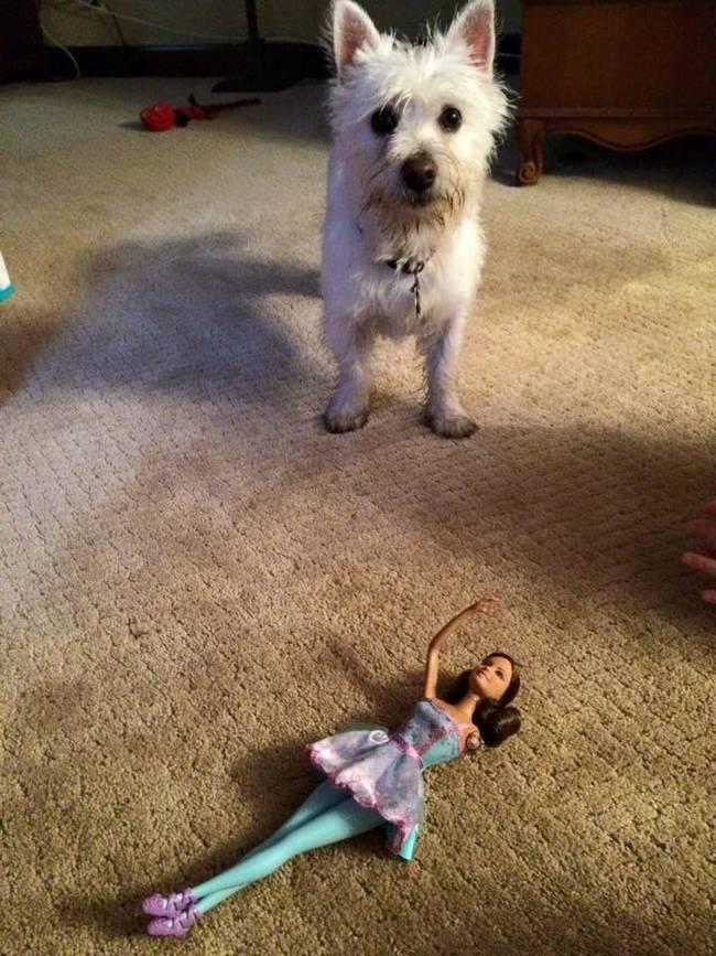 狗狗將芭比娃娃咬斷手臂,但爸爸「修復」殘臂的方法教會女兒人生其中最重要的智慧。