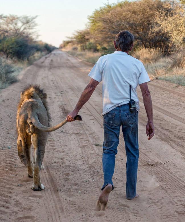 他們也會一同散步,Frikkie 還會抓著Zion的尾巴。