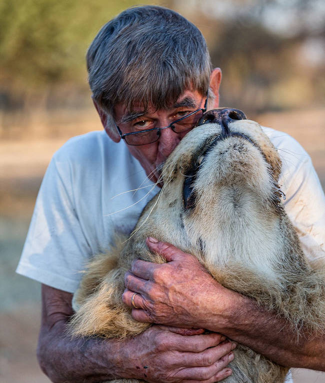 即便他現在是頭成獅了,他還是被Frikkie認為是個「溫柔的巨人」。