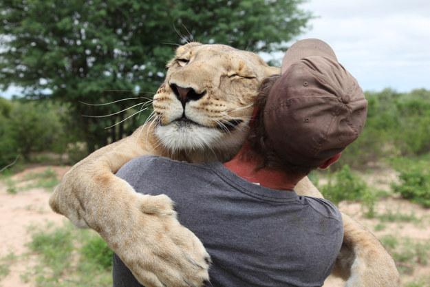 Sirga在她還是頭小獅子的時候,就被獅群給遺棄了。最後被這位27歲的德國動物保育者Valentin Gruener 救了下來並一手養大了。他們兩人變得密不可分,在3年後,每當Val打開鐵龍柵欄的時候,她就飛撲上來。(介紹:連結)