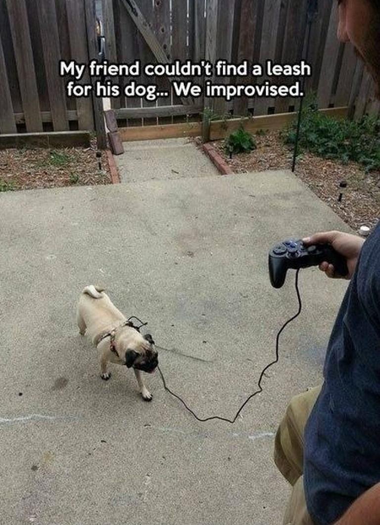 出門前找不到遛狗繩嗎?