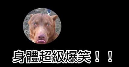世界上長得最奇特的比特犬和臘腸狗混種讓網路為之瘋狂,馬上造成了4萬次分享。
