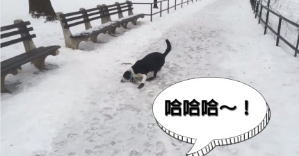 這個男生看到自己的狗在冰上跌倒後開始笑他,但沒想到現世報來得太快。