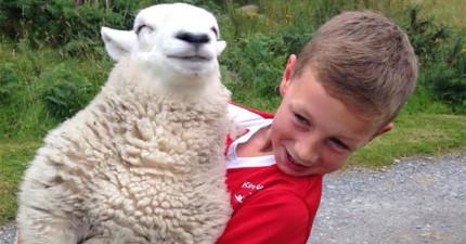 不要被這頭小羊騙了,她其實根本就是一隻狗!動作真的可愛到讓人受不了!